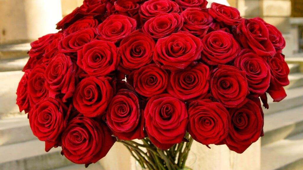 Hoa hồng - Quà tặng 8/3 cho công nhân, nhân viên nữ